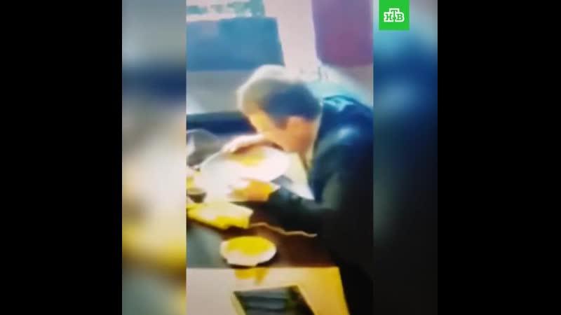 Яйцелиз Геращенко вылизывает тарелку. Лизоблюд обыкновенный в естественной среде обитания.