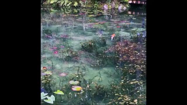 Les Nympheas Monet Seki au Japon 3ème Gymnopédie d'Érik Satie on Vimeo