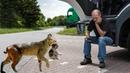 Рысь принесла котенка прямо к фуре дальнобойщика. Такого подарка он не ожидал