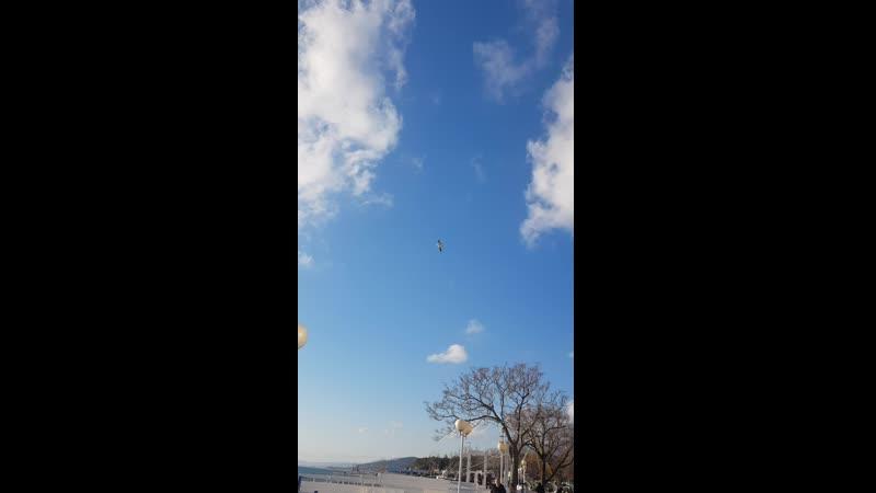 Чайка 02 03 2021 Кабардинка