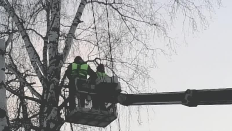 Работники электросетей пилят берёзы без моего разрешения shorts (1080p60fps)