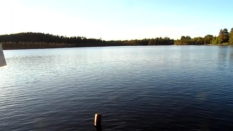 Утки на Белом Озере стали как куры SAM 2363