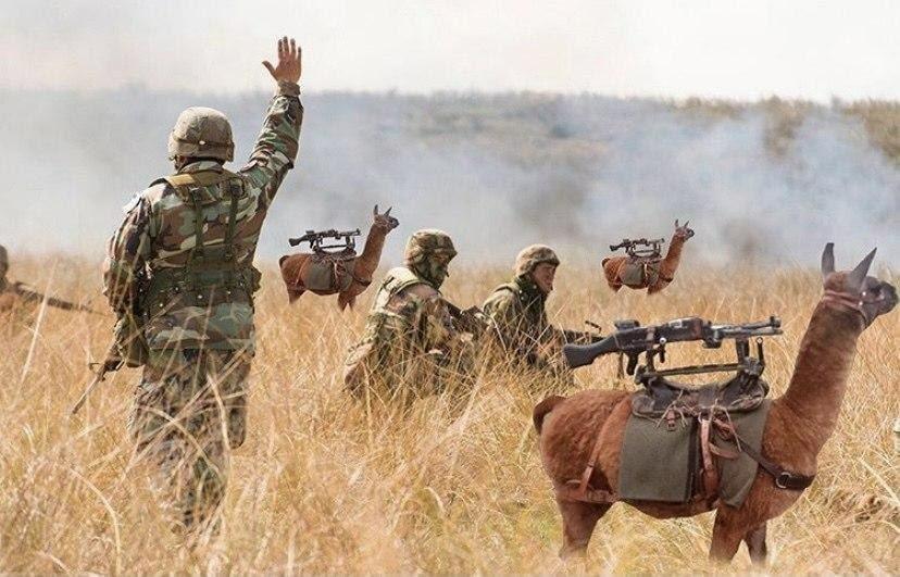 В Аргентине 20 боевых лам заступили на охрану границы в провинции Жужуй