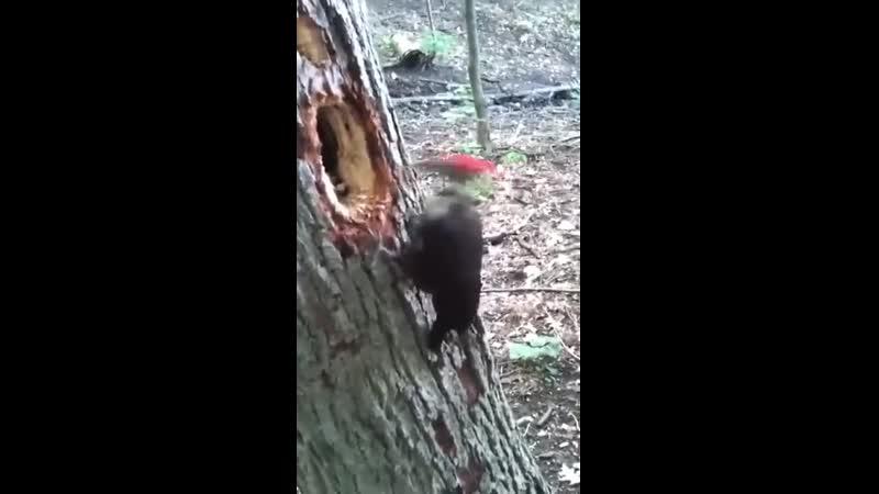 Alguna vez vieron a un pájaro carpintero hacer su nido