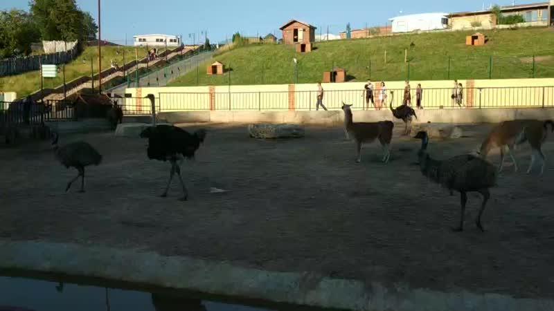 переговоры быков