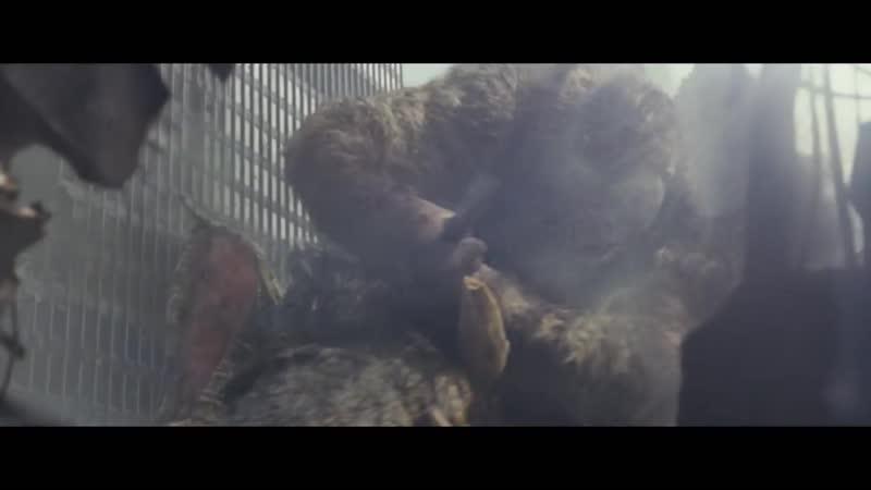ебанутый маргенштербгр напал на славу и начал перемещаться по измерениям моргентершбр он хочет секса ему срочно нужны обезьянки