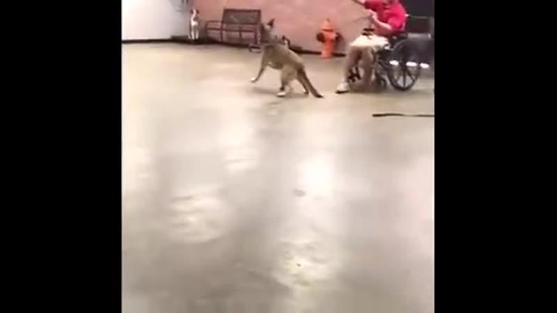 Самая лучшая собака поводырь