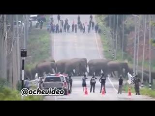 В Тайланде слонов возвращают в их естественную среду