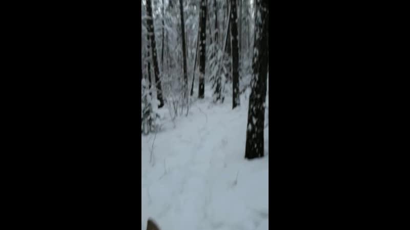 Зимние конные прогулки в сказочный лес