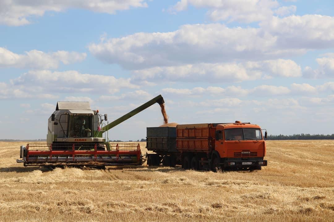 Хлеборобы Петровского района сегодня перешли рубеж по намолоту зерна в 100 тысяч тонн