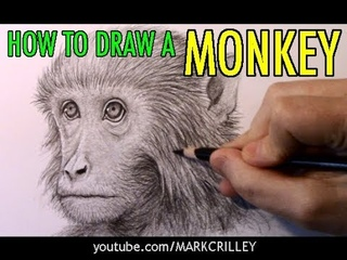 How to Draw a Monkey [Narrated Step-by-Step]