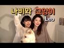 BOL4(볼빨간사춘기) _ Leo(나비와 고양이) (feat. BAEKHYUN 백현 from EXO) Cover
