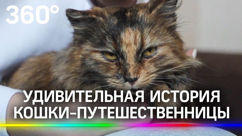 Кошка разведчица