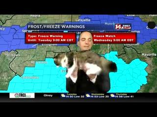 Синоптик американского телеканала передаёт прогноз погоды вместе с кошкой