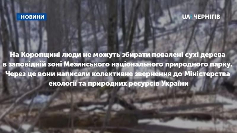 На Коропщині люди просять аби їм дозволили збирати сухі дерева в Мезинському парку