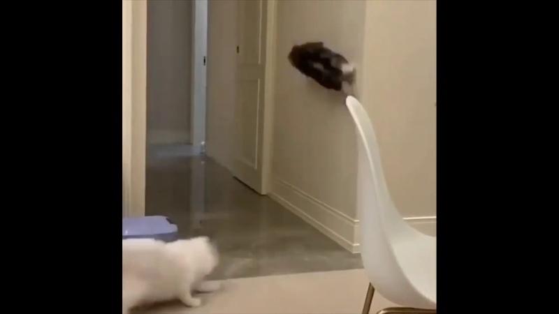 Cats funny top video