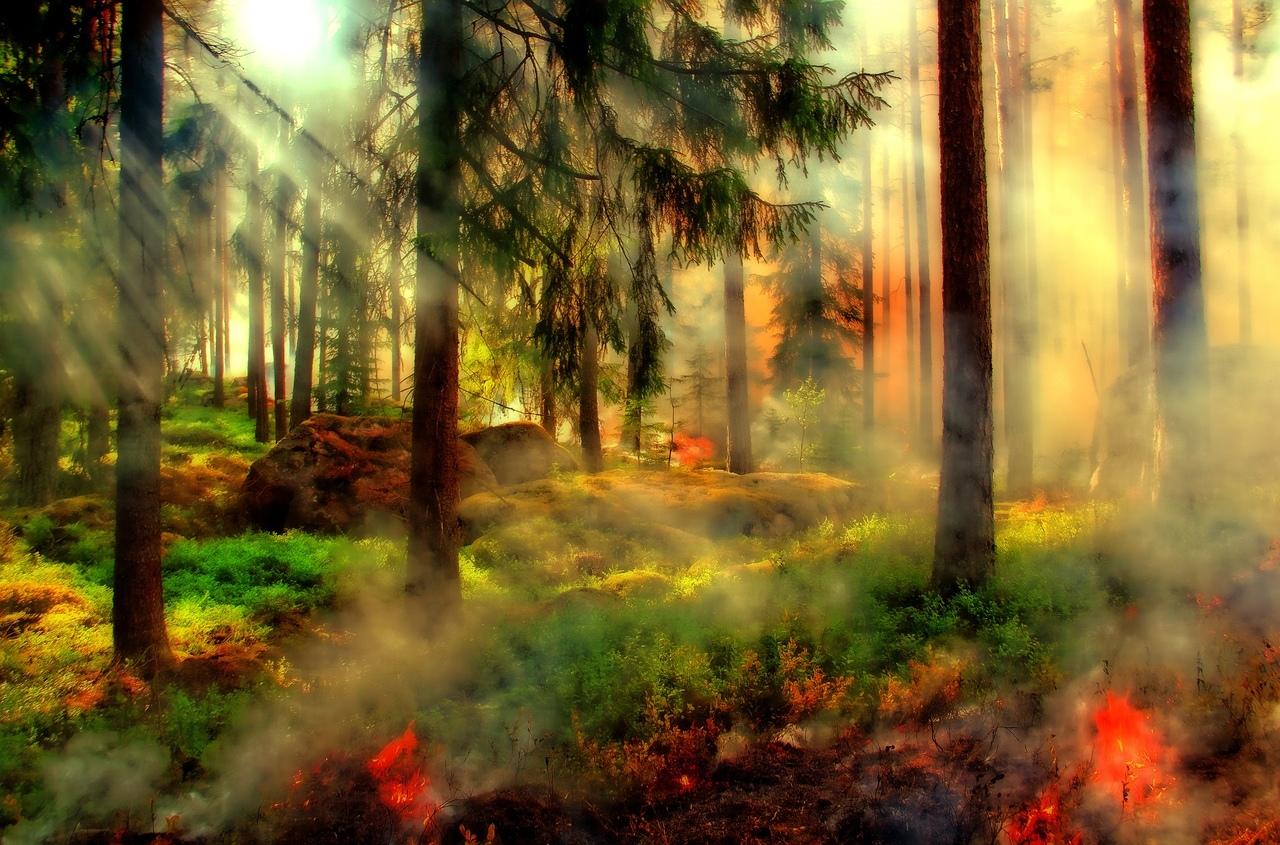 Июль в Марий Эл начался с лесных пожаров