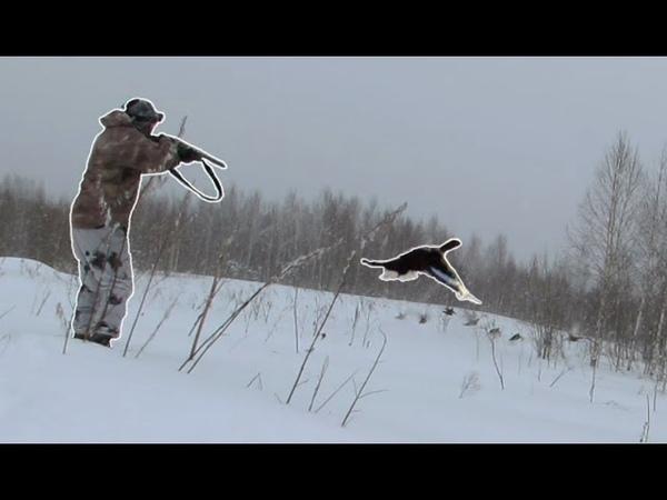 Охота на тетерева в снегопад На этот раз стрельба наладилась Охота на лунках