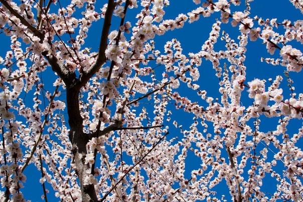 Следует ли удалять первые цветки у молодых деревьев