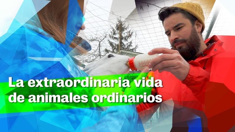 La extraordinaria vida de animales ordinarios La Lista de Erick
