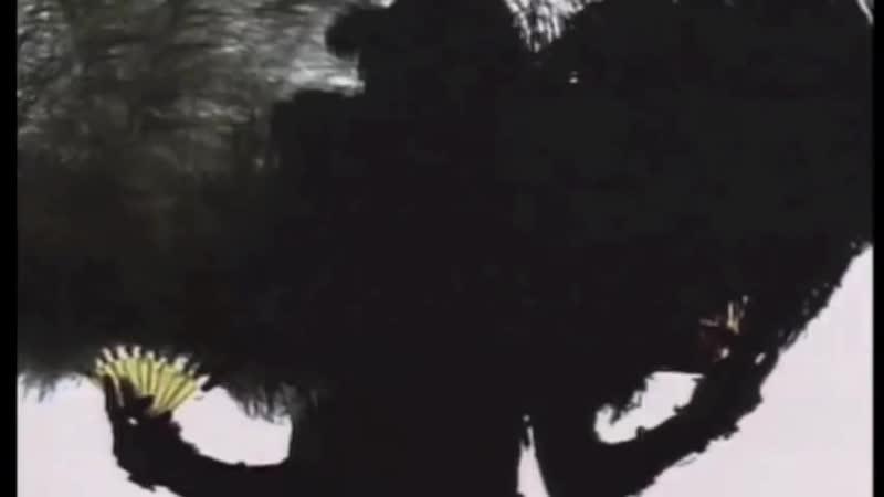 Peek A Boo Siouxsie and the Banshees