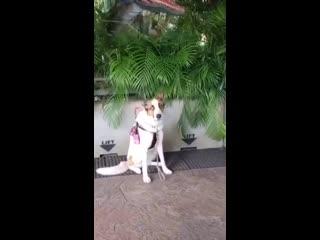 Пес, которого не испугать