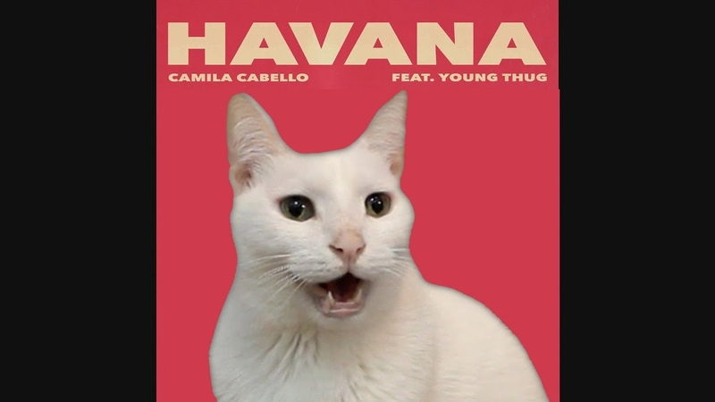 HAVANA Camila Cabello by CATS Despacito Shape of you More BEST Hits Cat Parody