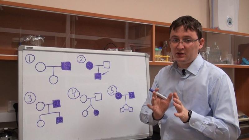 Анализ родословных Урок 2 Обозначения
