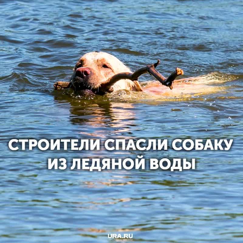 Строители спасли собаку, провалившуюся под лед в Екатеринбурге