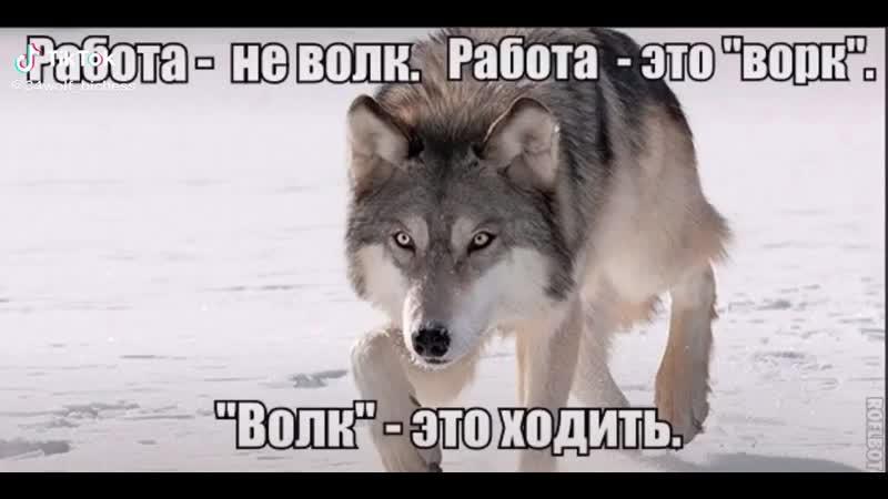 Волк это ходить Работа не волк Ворк это работа Безумно можно важно быть первым в цирке не выступает ауф auf ☝️☝️☝️ цитаты волка