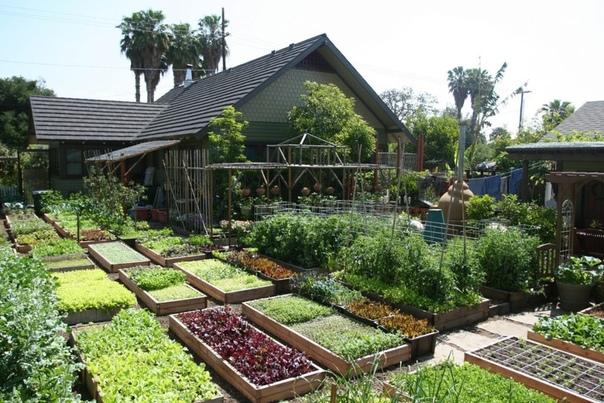 Какие плодово-ягодные культуры рекомендуются для посадки на 6 сотках.