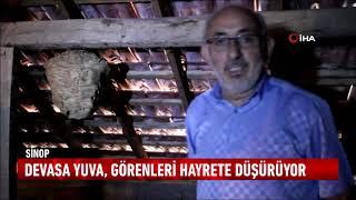 Sinop'un Türkeli ilçesinde, yaban arılarının bir evin çatısında kurduğu yuva şaşırttı.