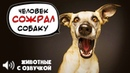 ГОВОРЯЩИЕ ЖИВОТНЫЕ 2 Приколы, юмор с озвучкой Лучшая ПОДБОРКА