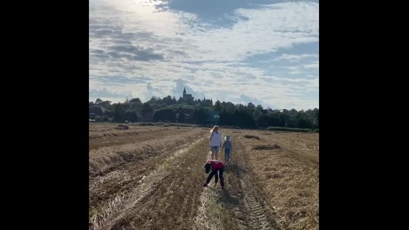 Галкин Замок, поле, семья, родной простор..гнездоперемешника
