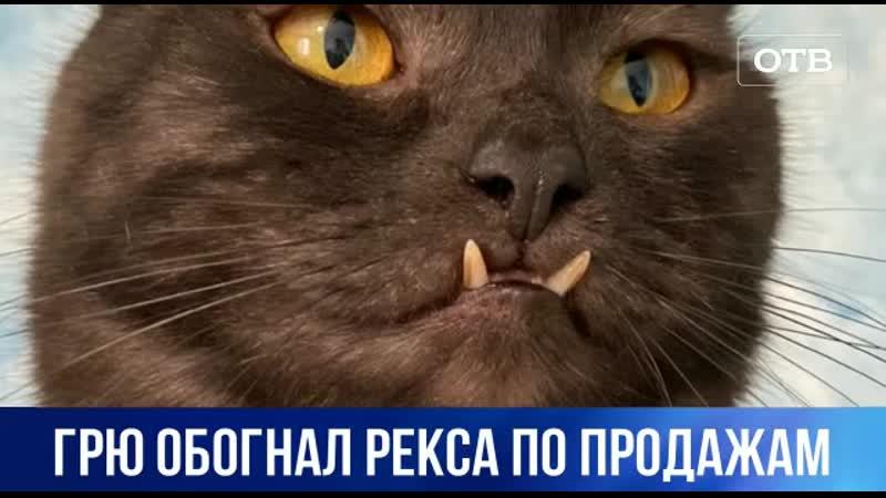Кот вампир и трёхлапый Рекс