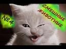 СМЕШНЫЕ КОТЫ, ПРИКОЛЫ с ЖИВОТНЫМИ FUNNY ANIMAL Video/ Приколы про котов НОВЫЙ ВЫПУСК