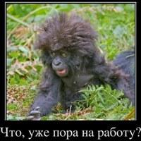 Фотография профиля Андрюхи Старого ВКонтакте