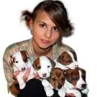 Фотография Джека Рассела-Випа ВКонтакте