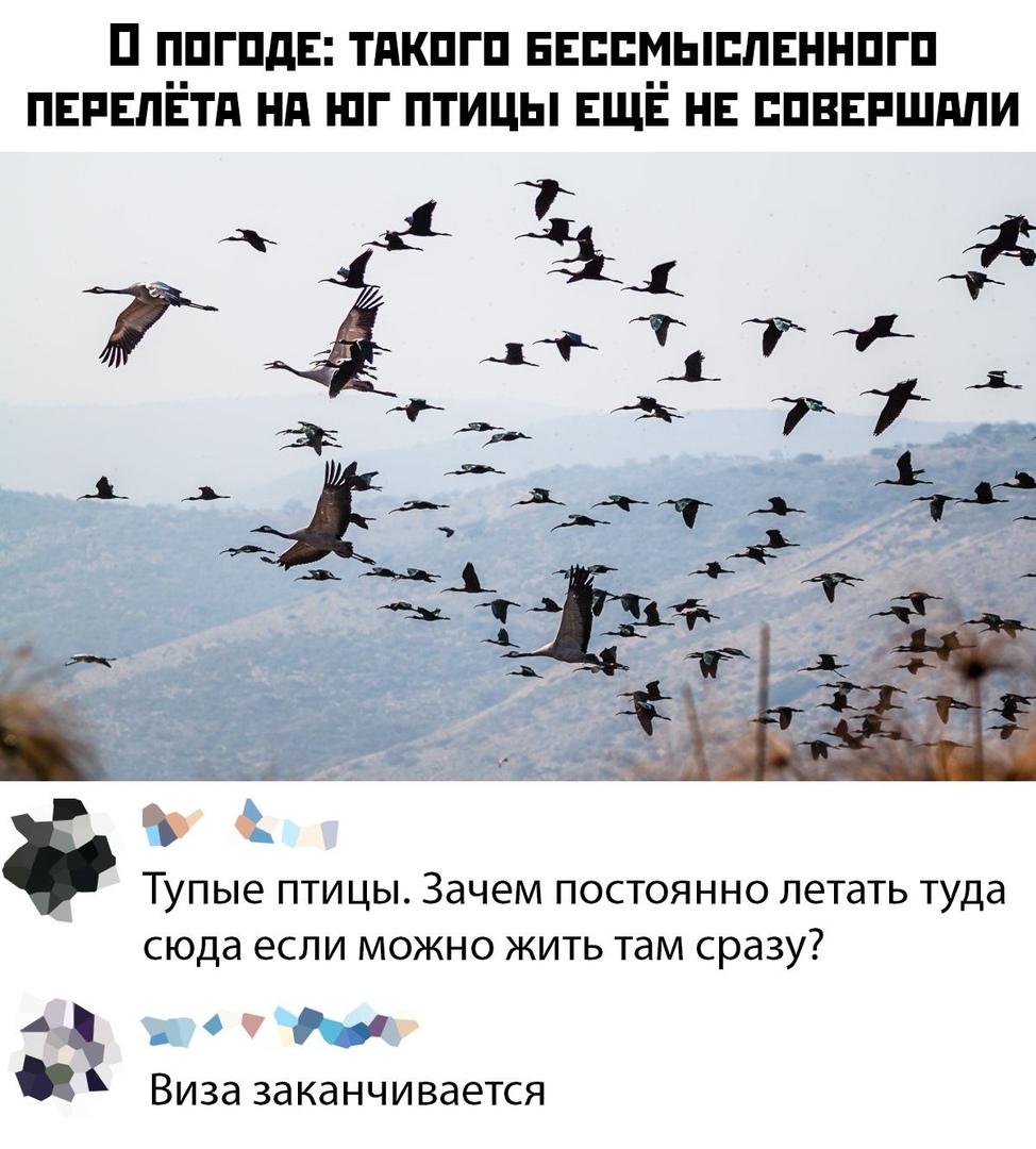 https://sun1-97.userapi.com/c543108/v543108525/6356d/D6gk76va--w.jpg