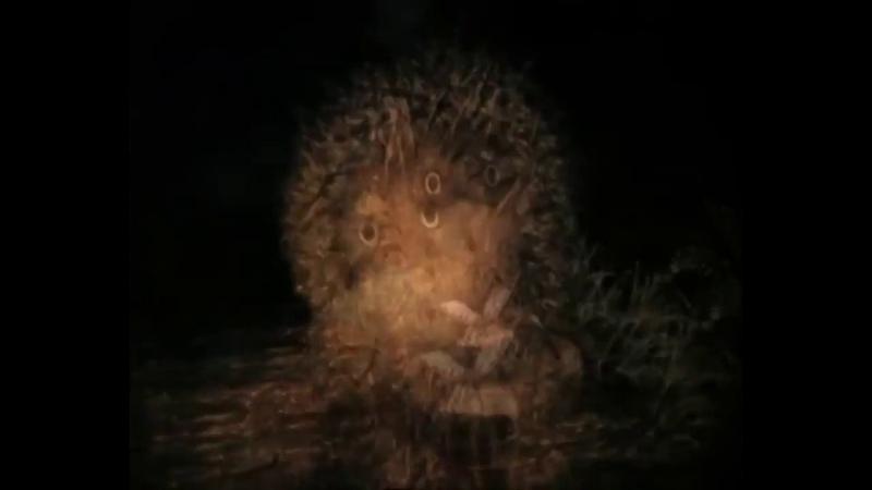 Ежик в тумане Медвежонок рассказывает как он преисполнился