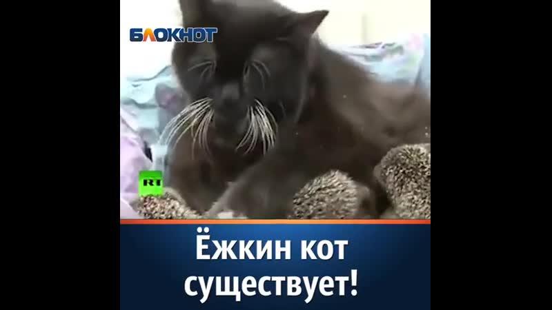 Ёжкин кот