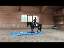 Working Equitation Akhal-Teke Degni Shael