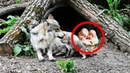 Среди волчат, кормящихся от волчицы, лежало два МЛАДЕНЦА. Волчица стала им МАТЕРЬЮ