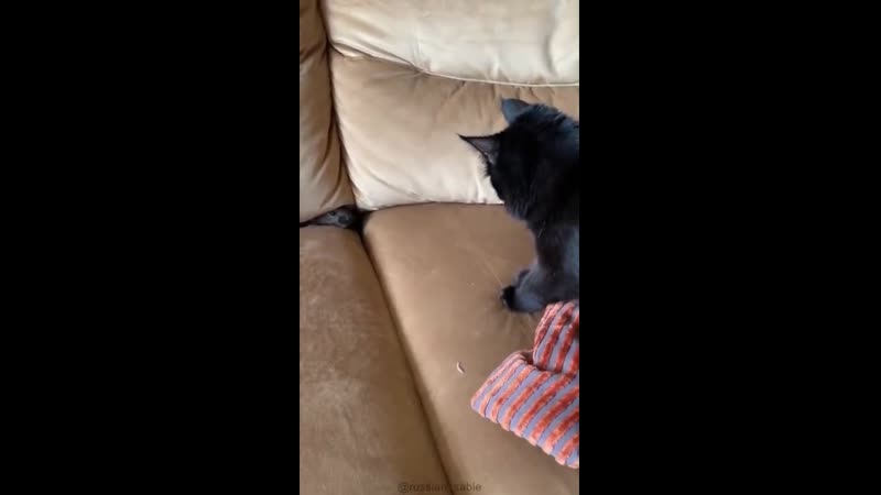 Домашний соболь круче котиков и собак