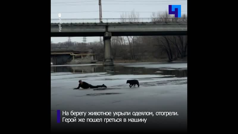 Житель Самары рискуя собственной жизнью спас собаку провалившуюся под лед