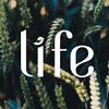 LIFE IS TRAVEL - журнал о путешествиях