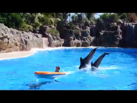 22.08.2014 Tenerife, Puerto de la Cruz - Loro Parque 141244000535 DSC_0629.MOV