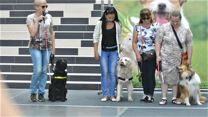 Собаки поводыри на улицах города